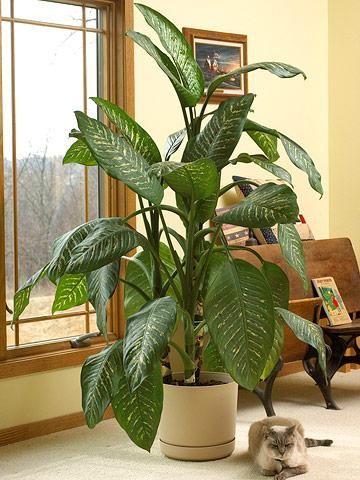 20 Super Easy Houseplants You Ll Love Easy House Plants 400 x 300