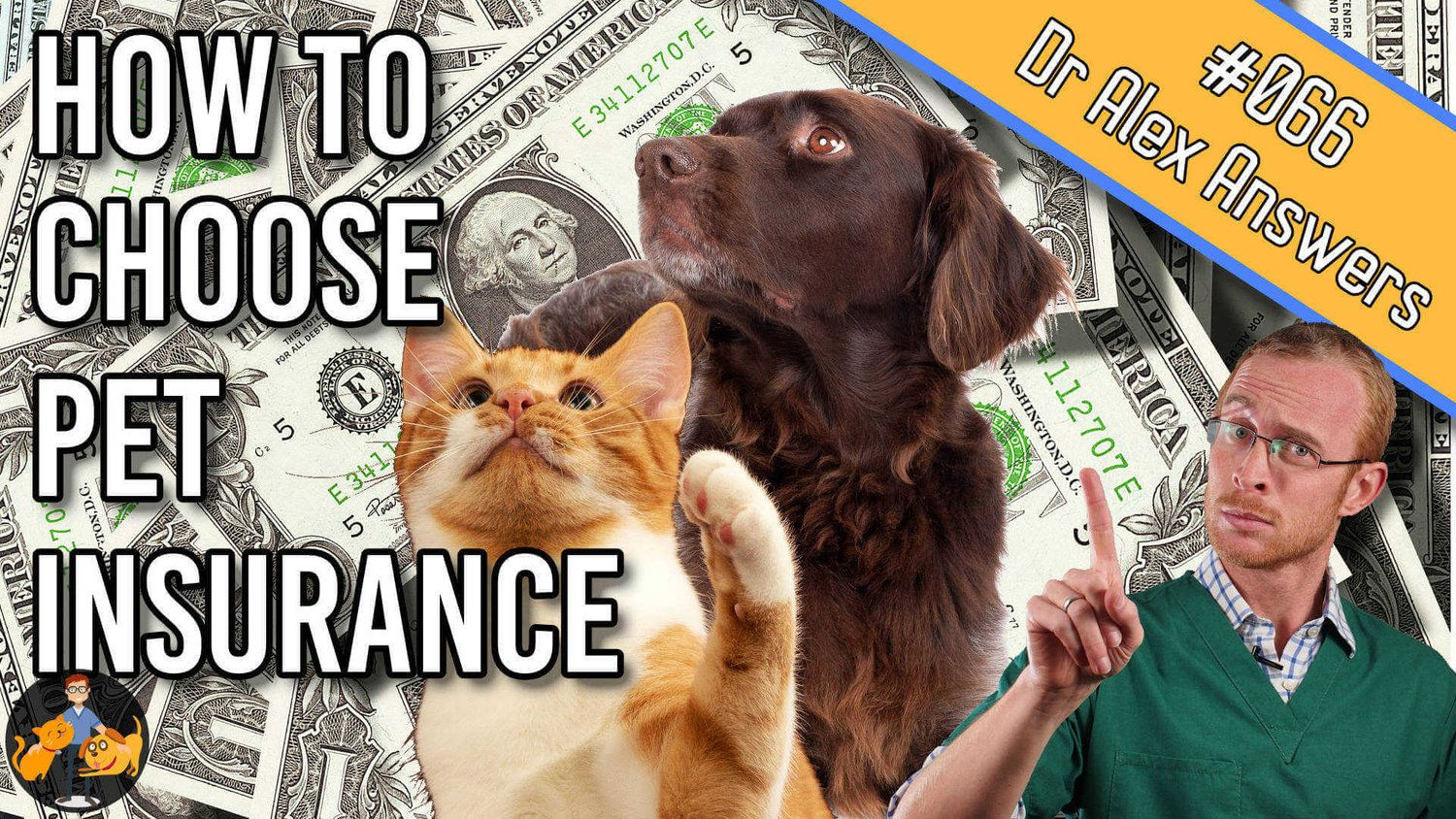 How to choose the best pet insurance in 6 steps best