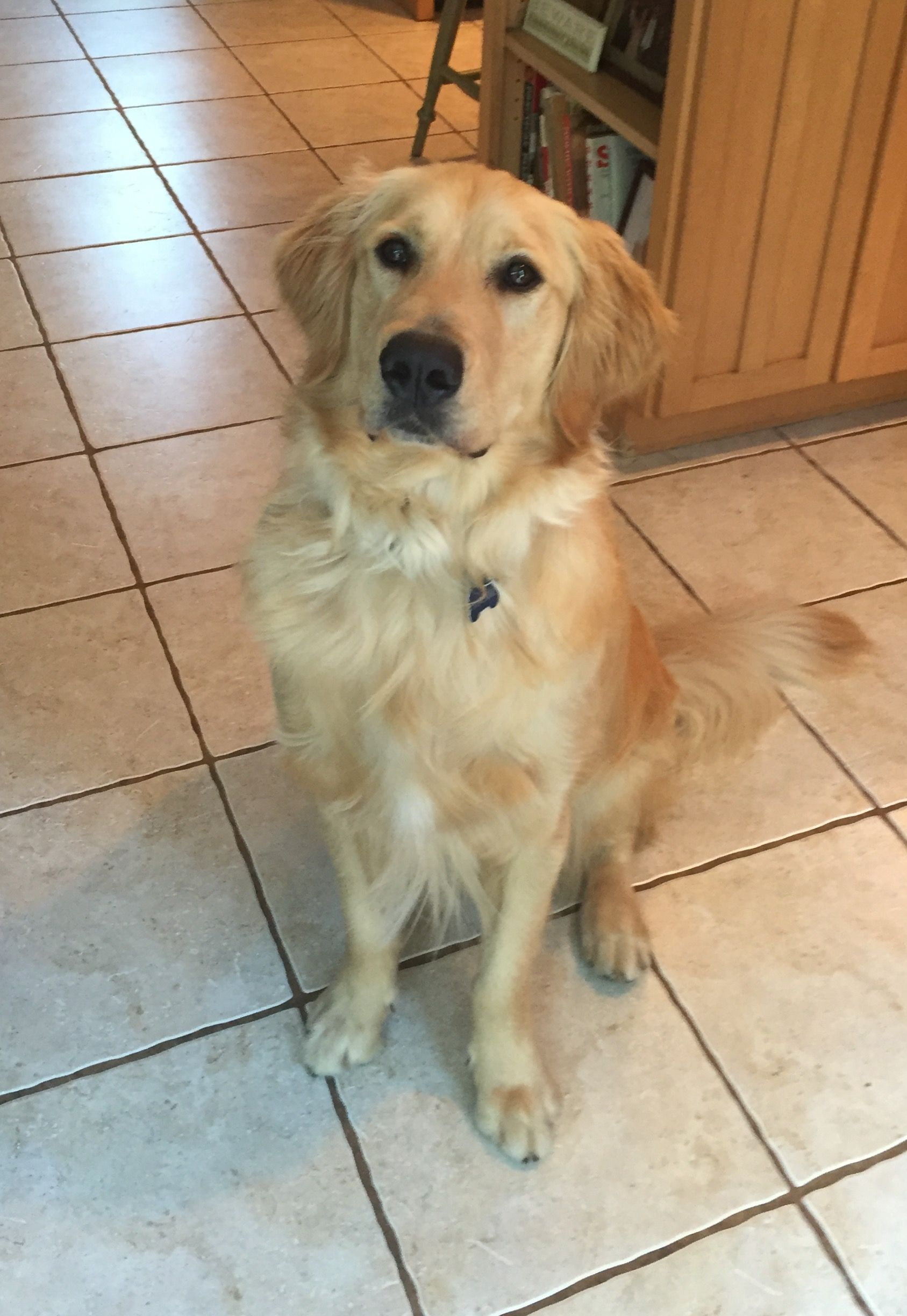 Handsome Tucker 21 Months Old Beautiful Dogs Pet Dogs Dogs