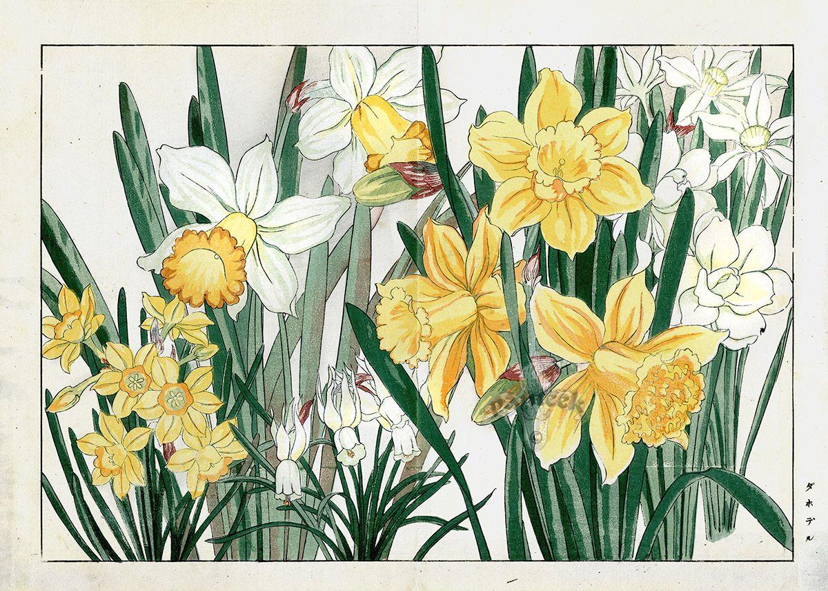 Spring Daffodils Tanigami Konan Western Flower Woodblock Prints 1917 Flowers Gardens Japanese Woodblockpr Botanical Prints Flower Art Japanese Art Styles