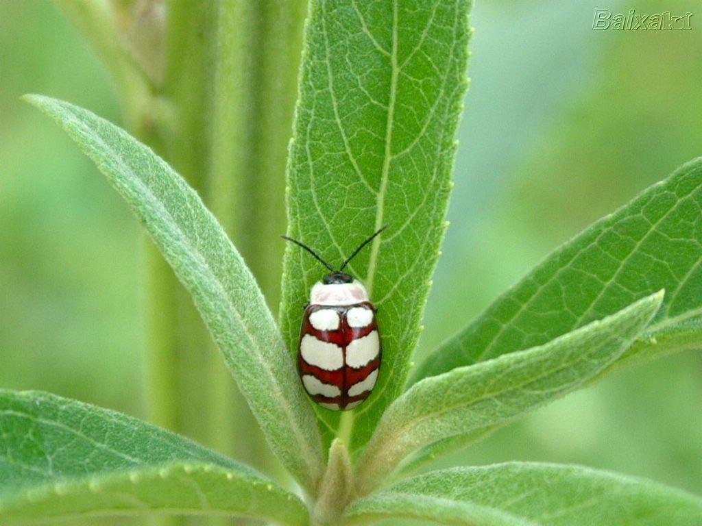 Diário de uma Sementeira: Insetos benéficos para suas plantas