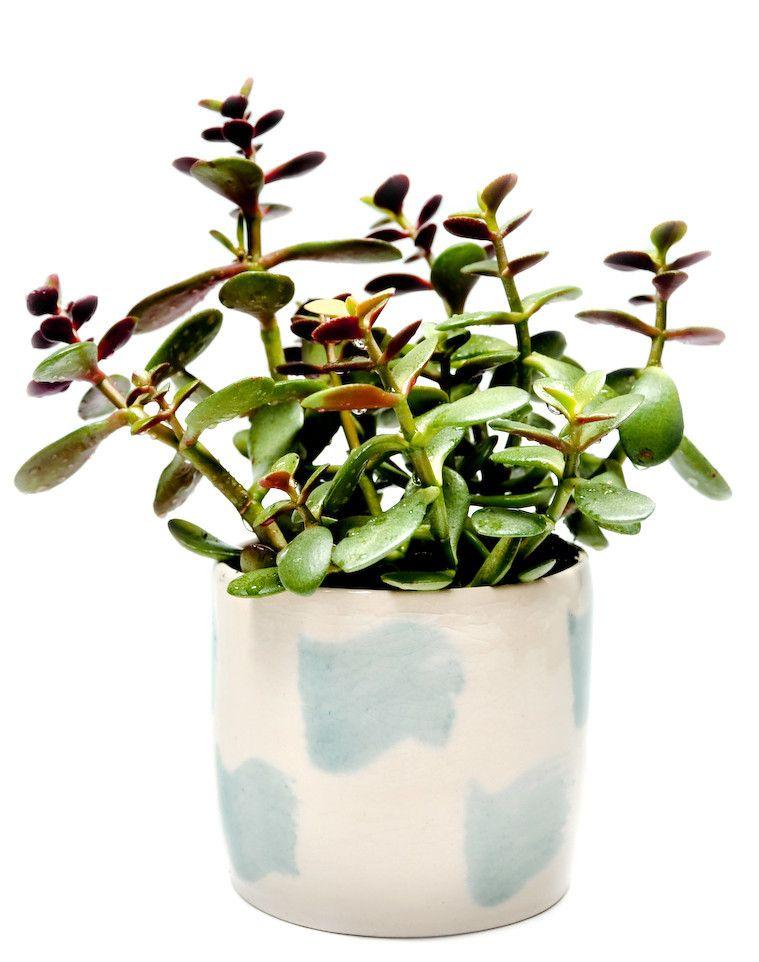 brushstroke planter, $40