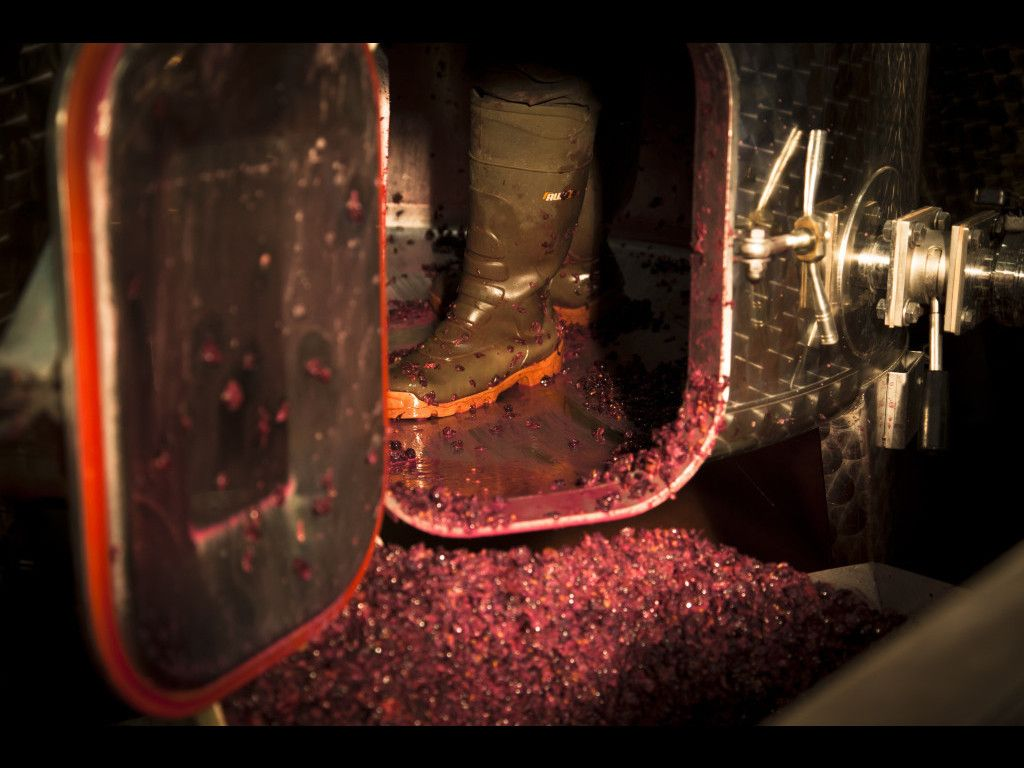 Cave En Bourgogne Viticole Decuvage Bourgogne Vigne Vin