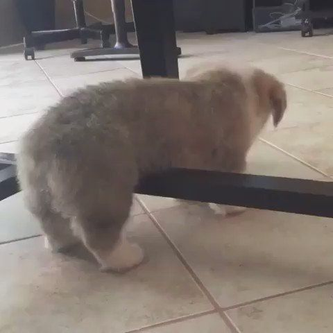 """Cutest Animals Ever en Twitter: """"Oops i is stuck https://t.co/8CMhmyQg49"""""""