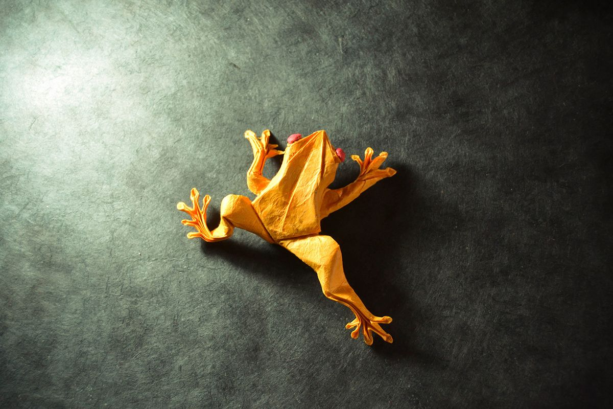 Photo of Toadly Awesome, Un-Frog-Gettable and Quite Ribbitting Origami Frogs