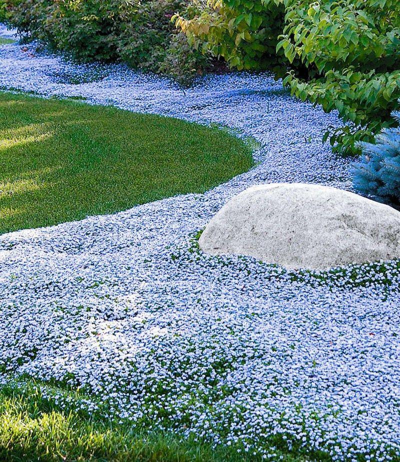 Polsterstauden im Garten – schöne Arten und nützliche Pflegetipps ...