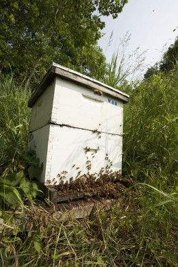 Backyard Beekeeping · How NOT To Get Stung Tending Your Bee Hives And  Honeybees