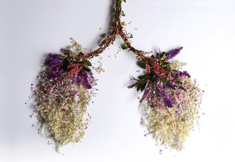 Eye Heart Spleen: Human Organs Made from Flowers and Plants by ...