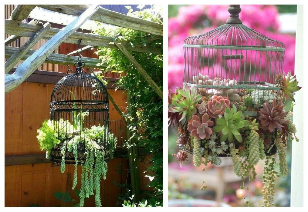 05 diy plantas colgantes jaulas plantas pinterest - Plantas colgantes de exterior ...