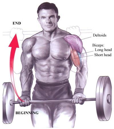 Barbell-curl's are one of the best biceps exercises you can do and ...
