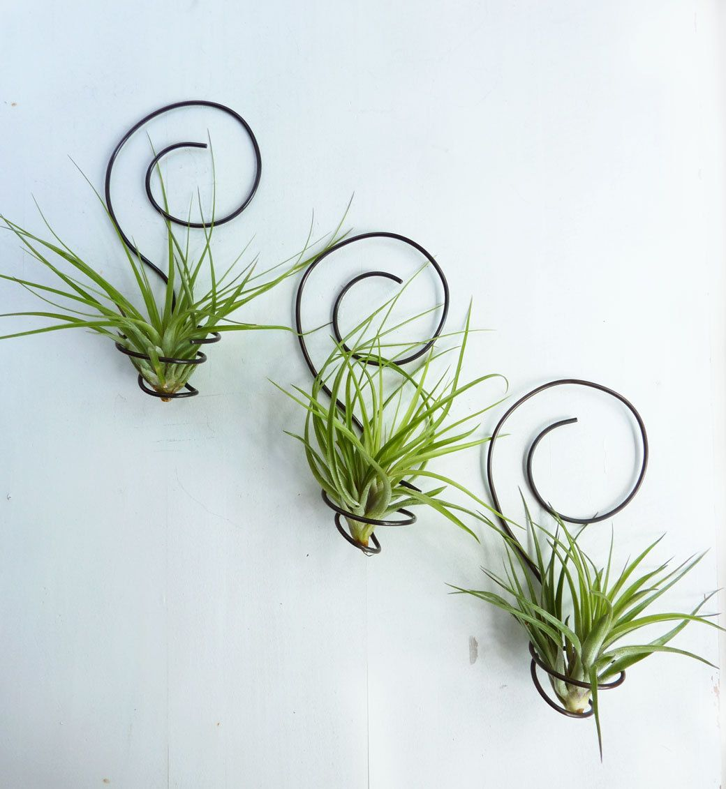 Reserved for Three wire Air plant holders - Spiral Wall Hanging