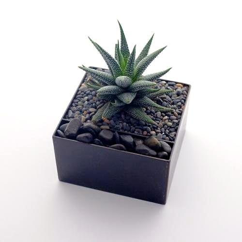 Self watering Boxx planter ; Gardenista