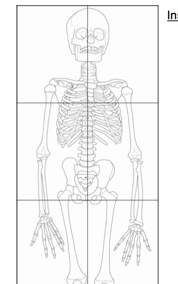 Printable adult and toddler sized skeleton download site