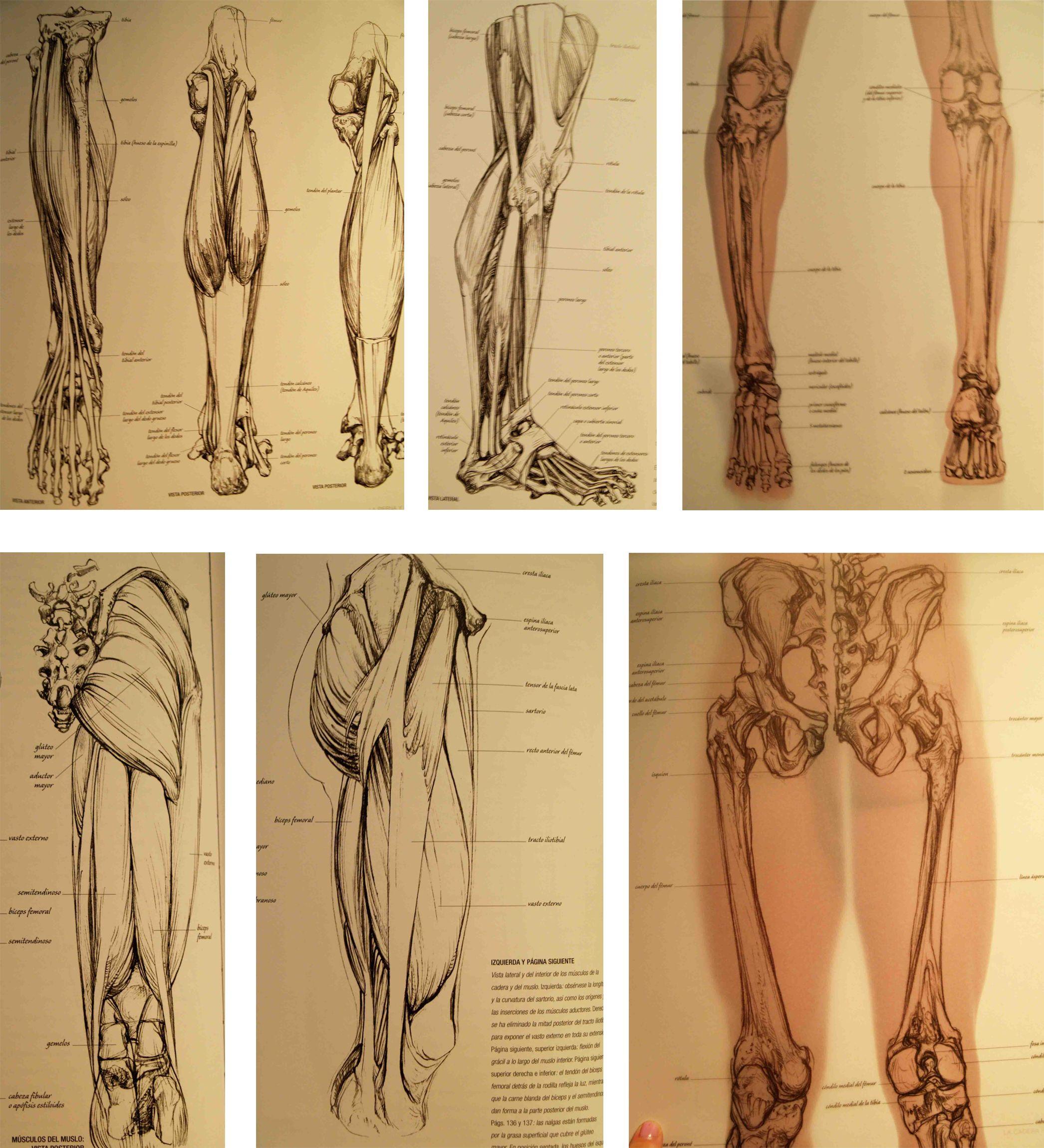 Único Anatomía Para El Artista Por Barcsay Jeno Foto - Imágenes de ...