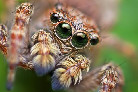 Arachnids spiders 1100x773 HD Wallpaper. Free HQ Wallpaper.