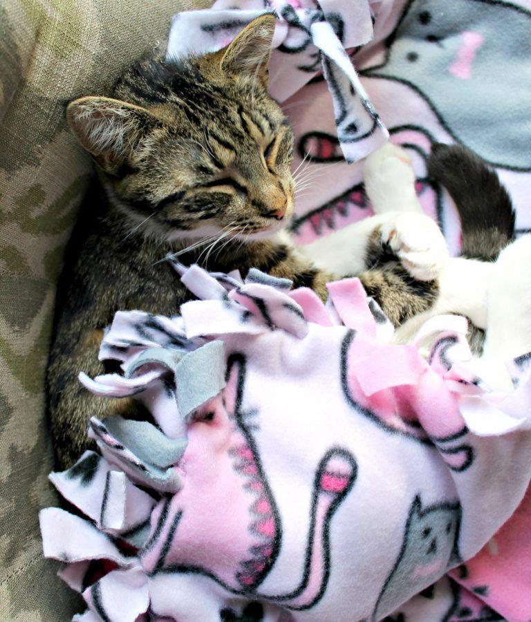DIY Pet Blanket Diy pet blankets, Diy cat blankets, Tie
