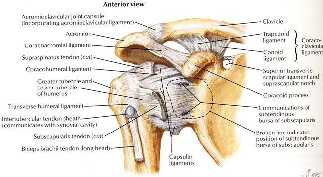 Osteosinteza Claviculei | Chirurgia umarului, cotului si a genunchiului