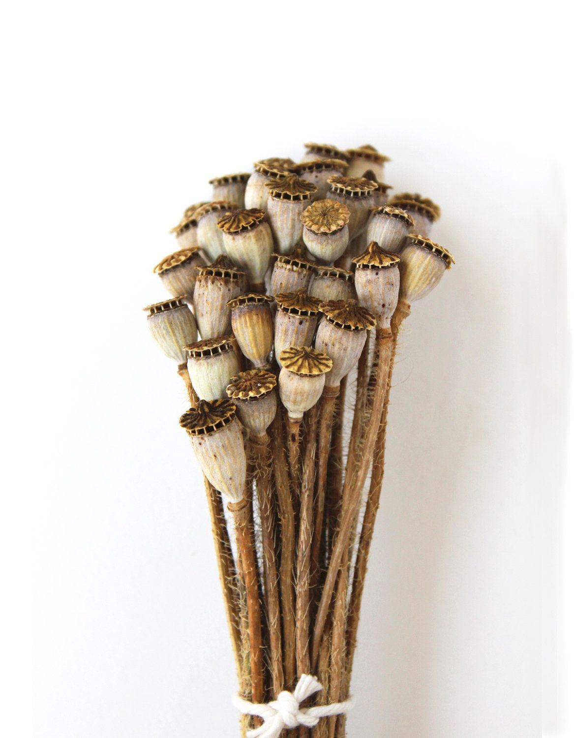 Dried Poppy Pods All Pinterest Seeds Flowers And Flower