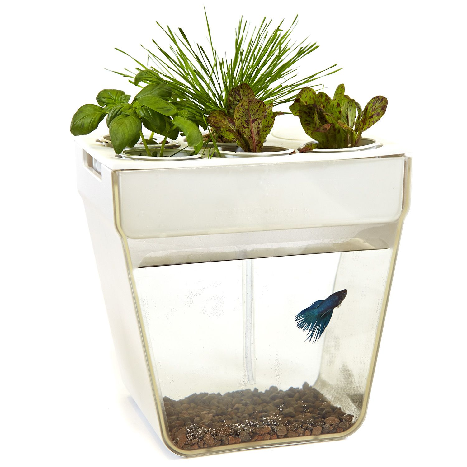 Back to the roots aquafarm 3 gallon fish tank perfect for Betta fish feeder