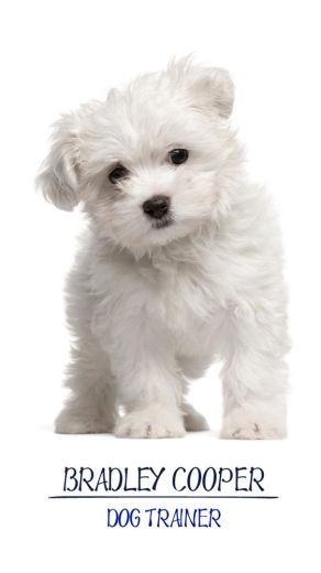 Simple Puppy Maltese Dog Breed Low Maintenance Dog Breeds