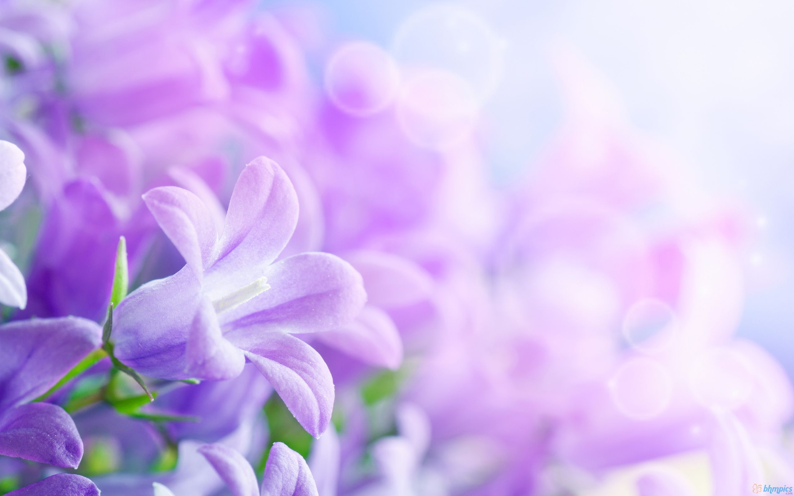Flower Wallpaper Purple Spring Flowers Wallpapers Iphone With