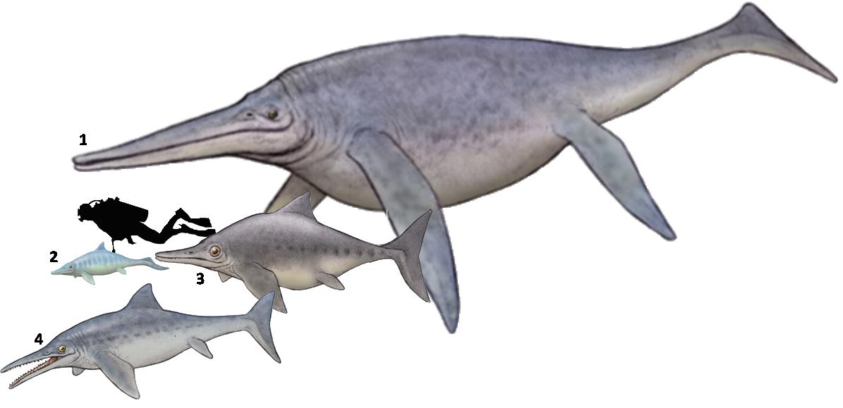 1 shonisaurus popularis 2 mixosaurus atavus 3