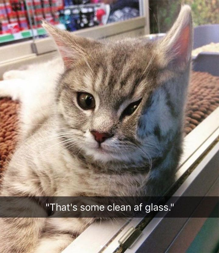 New Funny Clean 30 Funny Animal Pictures You Really Just Need To See For Yourself - JustViral.Net 24 Funny Animal Pictures You Really Just Need To See For Yourself 5