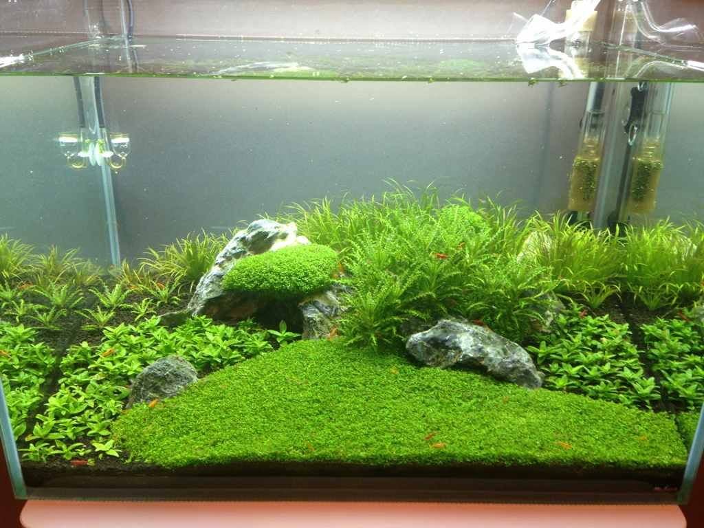 Post your shrimp tanks pinteres for Planted tank fish