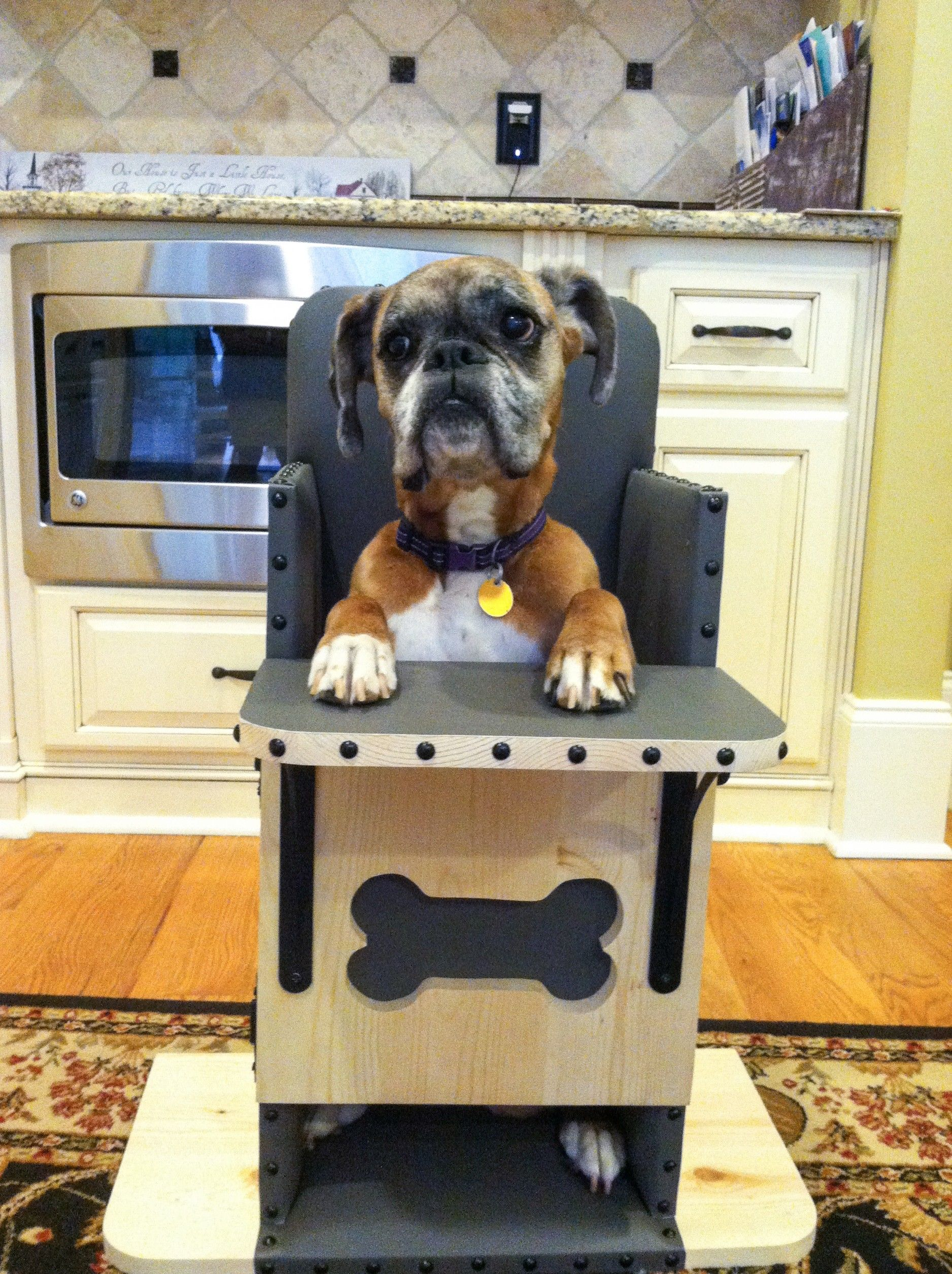 Dog High Chair Target Kitchen Chairs We Build Bailey For Dogs Diagnosed With Canine Megaesophagus