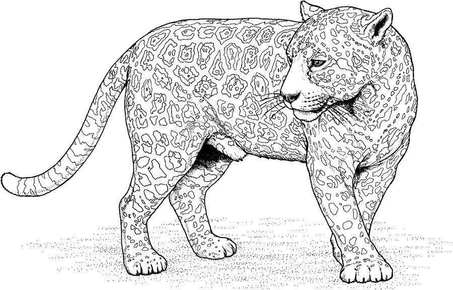 Ausmalbild Jaguar Tier Kostenlos Malvorlagen Tiere Mandala Tiere Mandala Malvorlagen