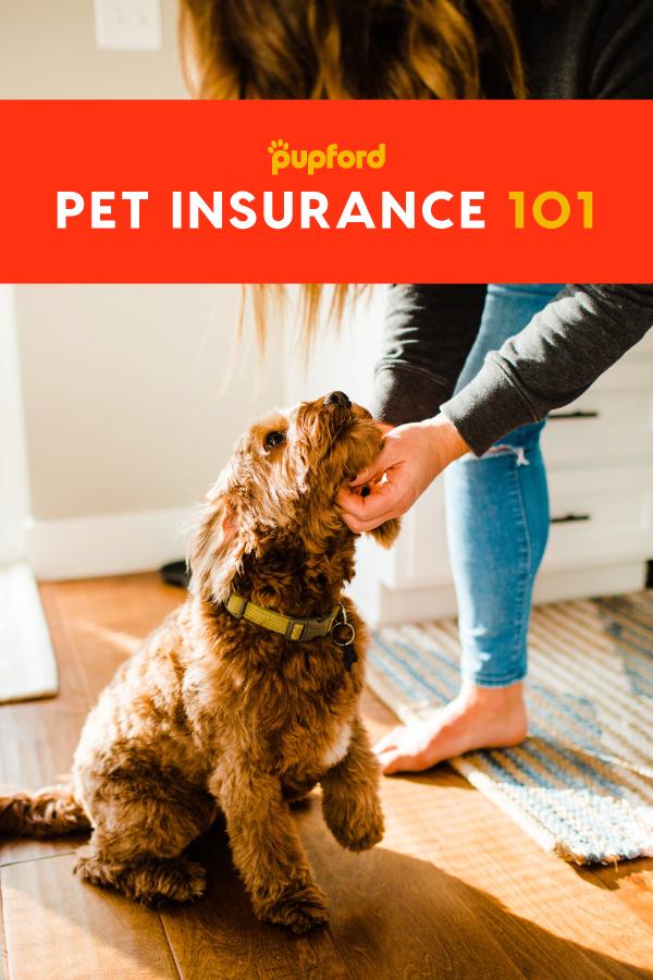 Pet Insurance 101 A Beginner S Guide Pet Insurance For Dogs