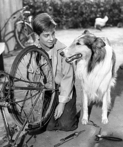 Lassie The Original Television Series That Followed The