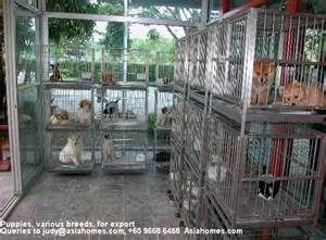 What Everybody Is Saying About Pet Shop Shops In Singapore Is Dead Wrong And Why Pet Shop Pets Shopping