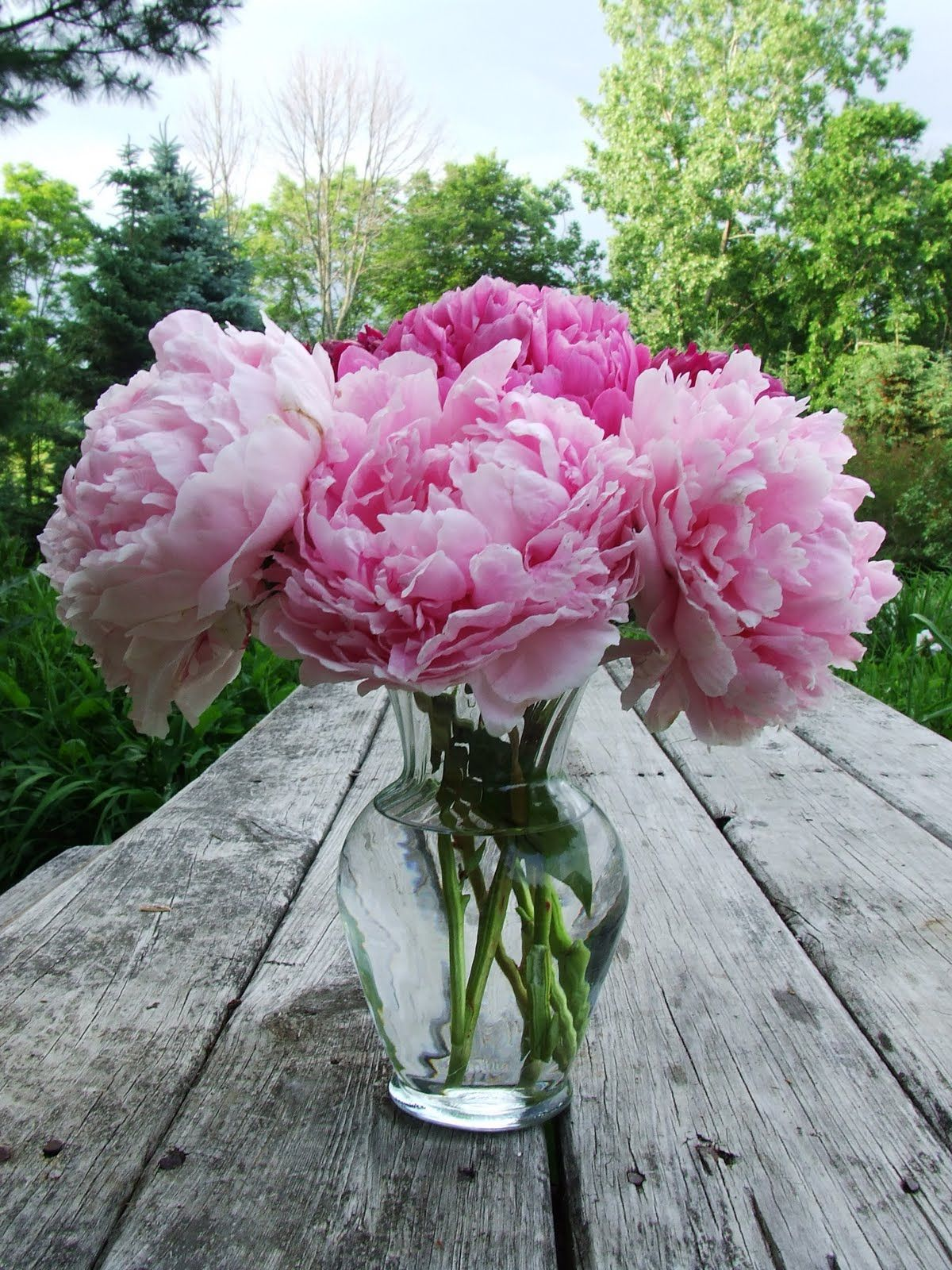 Walked down the stairs this evening and there is my husband, arranging several peonies from his garden in a vase for me :)  What a good guy :)  I got a kiss for each one also <3