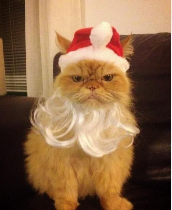 A Santa Costume For Cats | Santa Clothes, Santa Accessories, Santa ...