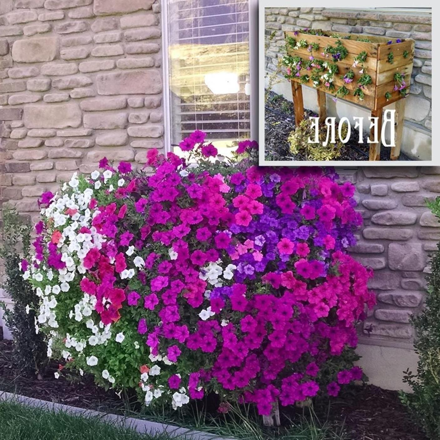 32 Beautiful Ideas Cascading Flowers For Window Boxes Met