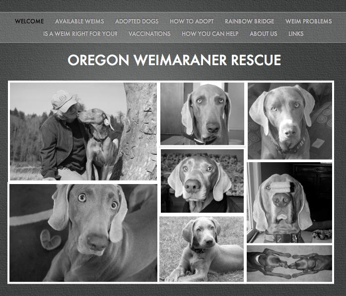 Oregon Weimaraner Rescue