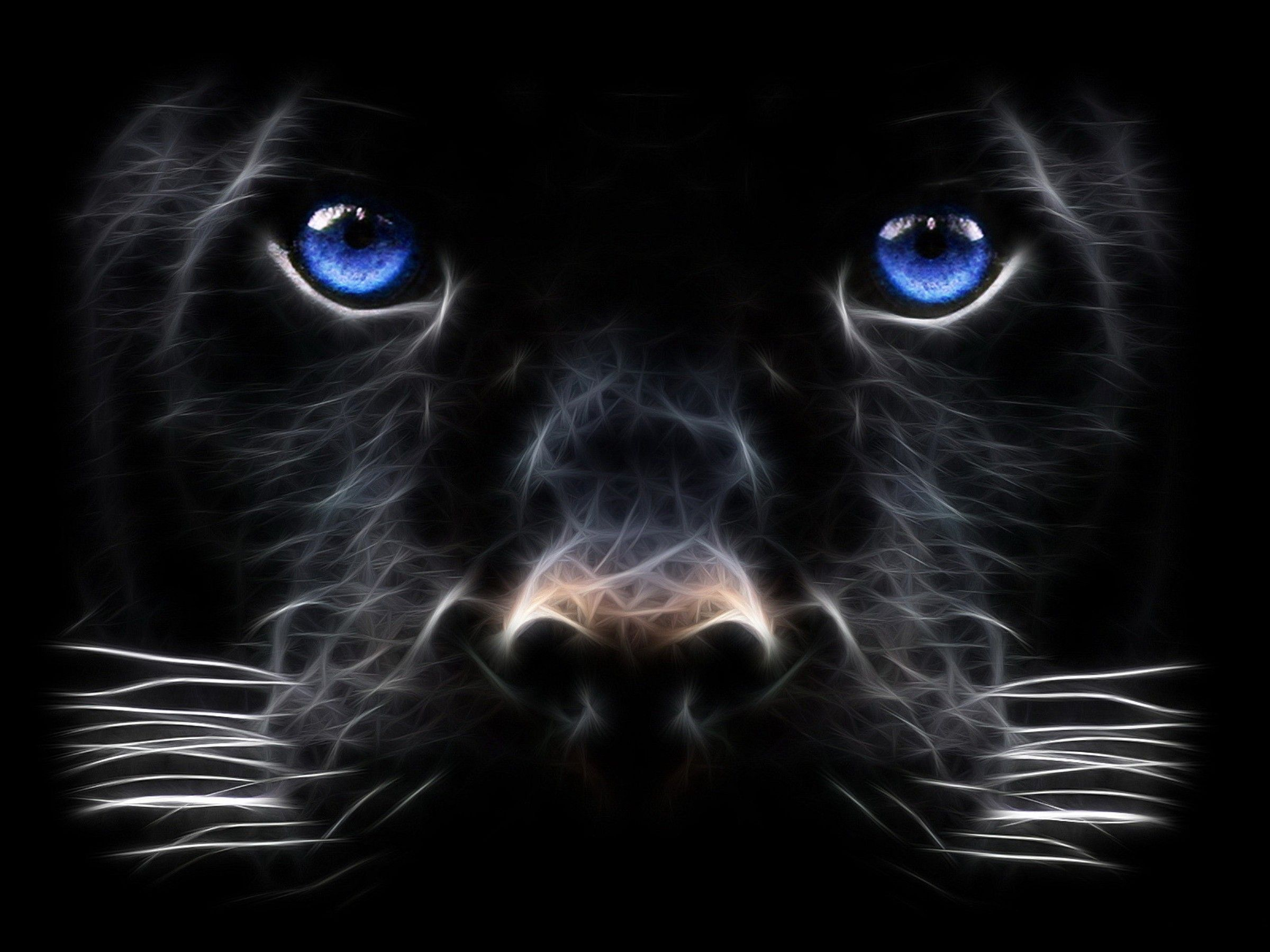 3d Abstract Design Wallpapers Desktop Backgrounds Animals Panther Pictures Cat With Blue Eyes