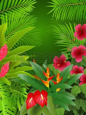 Amazon Rainforest Fond Foret Tropicale Dessin Foret Dessin