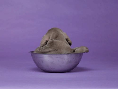 William Wegman. WW's First Animated Gif