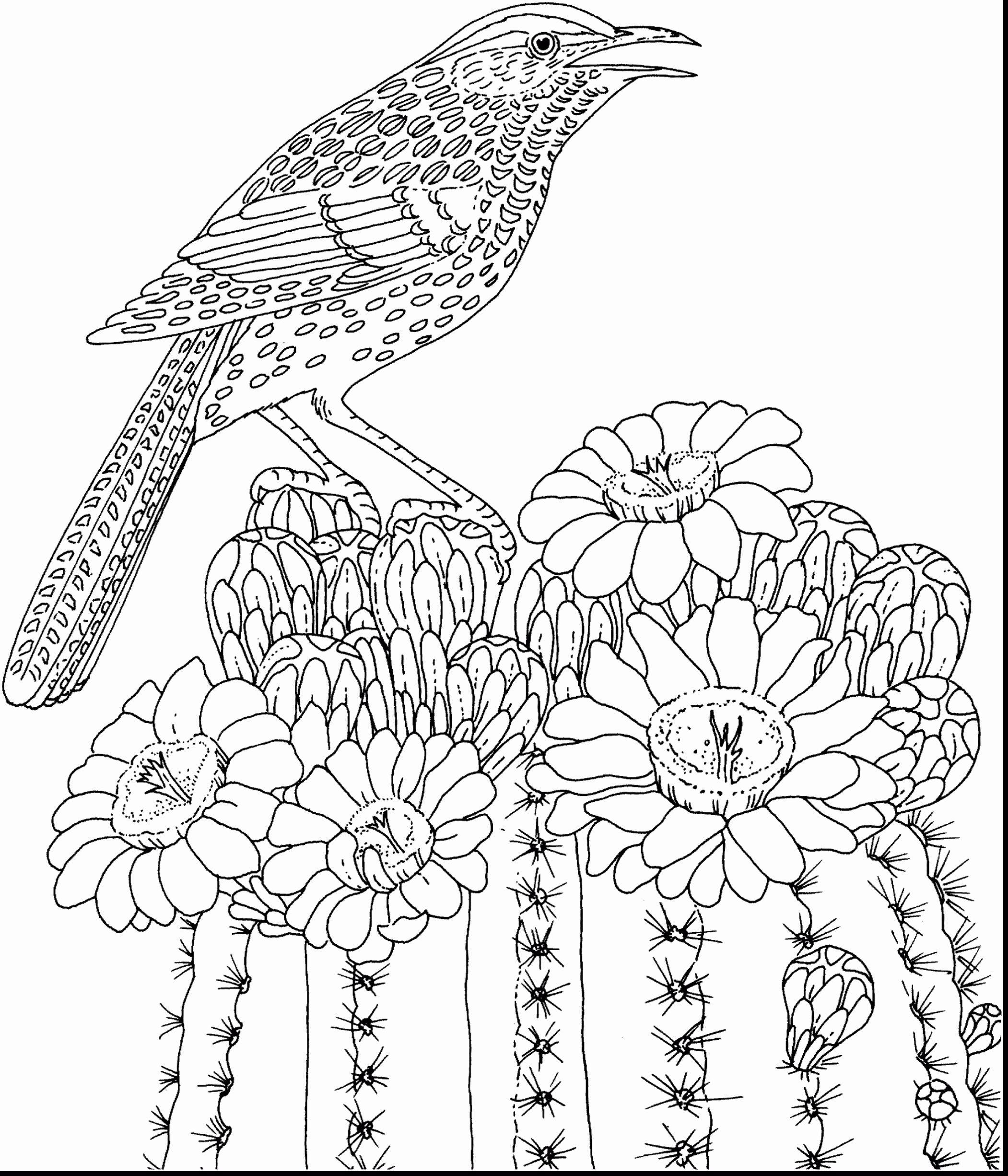 Spring Coloring Sheets For Adults Em 2020 Flores Para Colorir