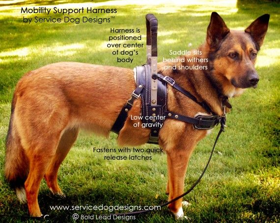 Beautifully made mobility harness for service dog work.