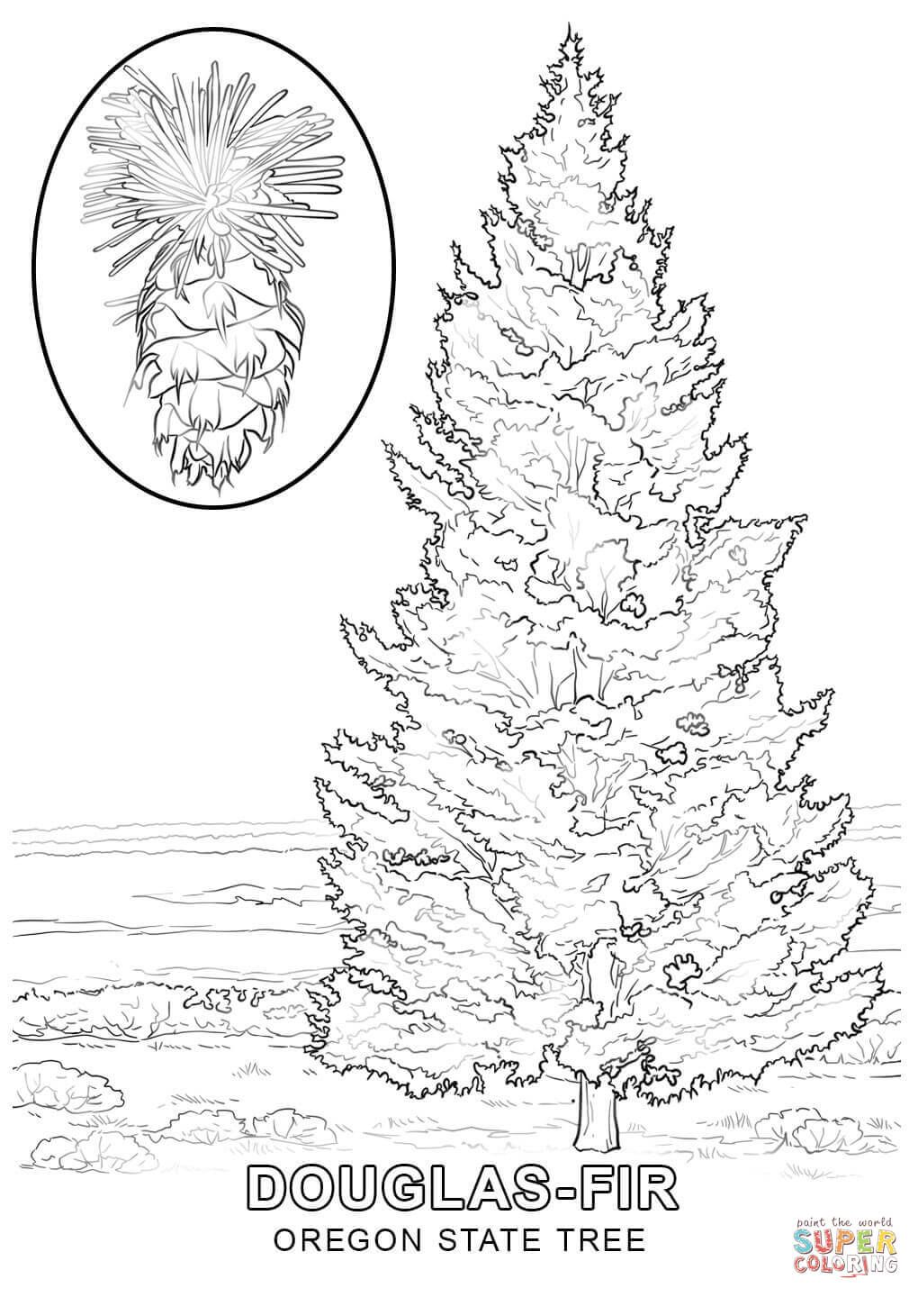 Oregon State Tree Coloring Page Tree Coloring Page Coloring