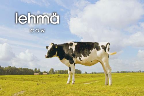 lehmä - tehén