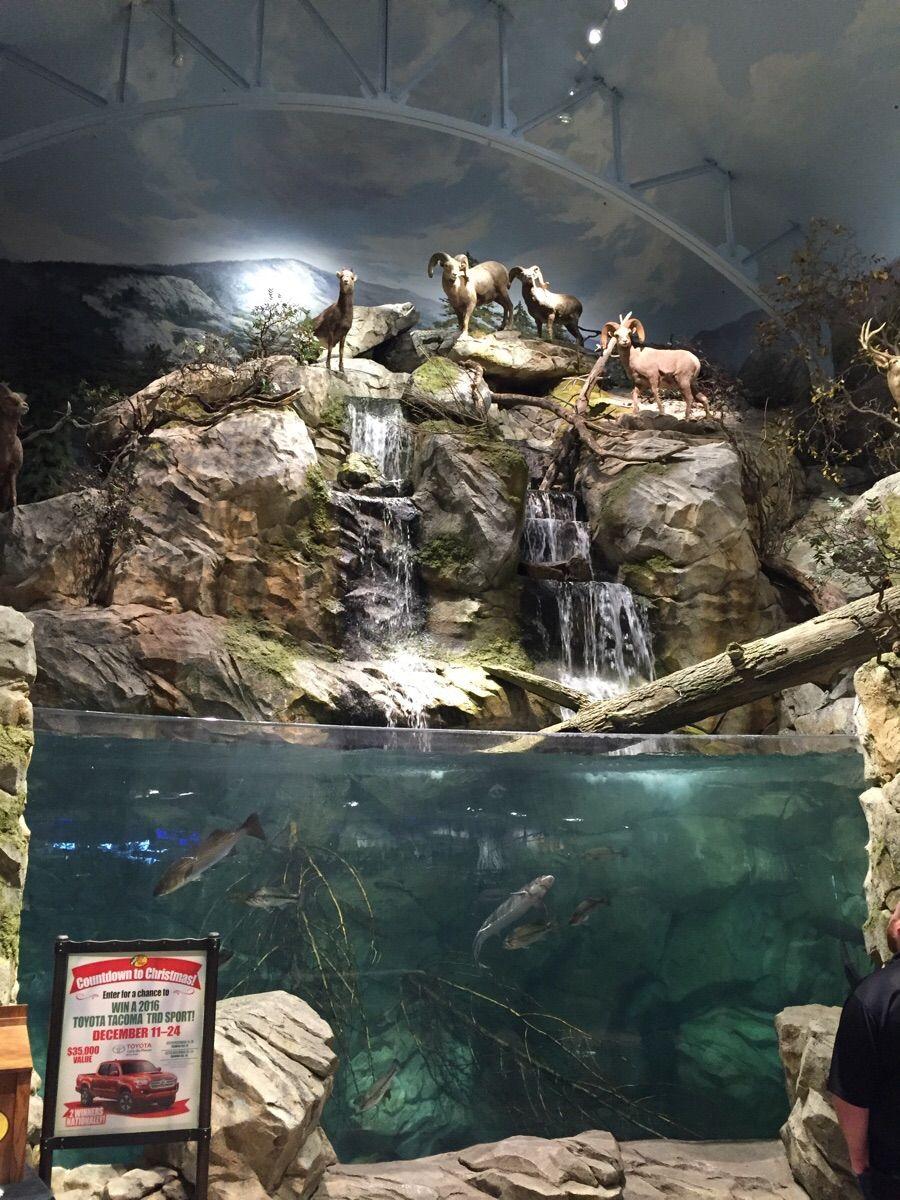 Crazy Tank Found At Local Bass Pro Shop Public Aquarium Fish Tank Aquarium Backgrounds
