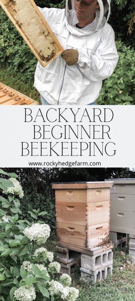 Backyard Beekeeping for Beginners - Ask Yourself These ...