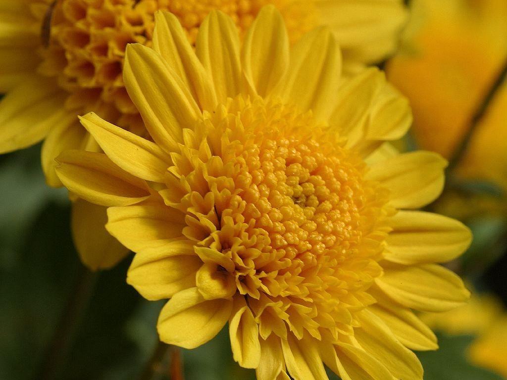 049 Flowers Yellow Silver 15 Pinterest Flowers