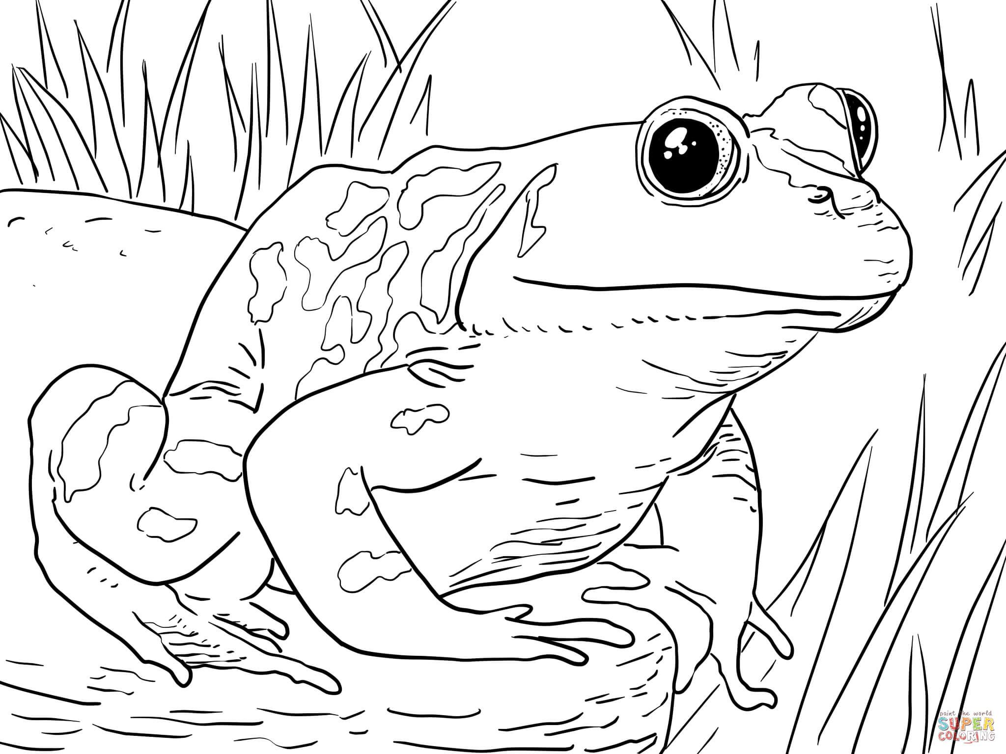 This Frog Coloring Sheet Is The Perfect Animal Coloring Pdf To