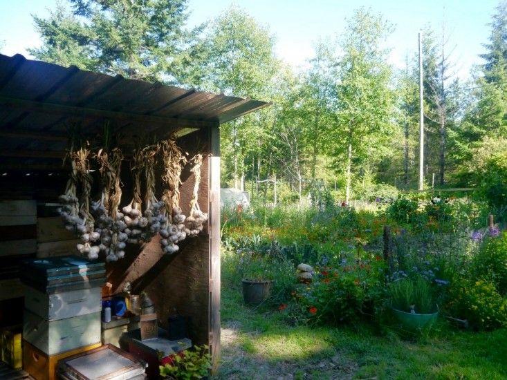 Garden Visit Honey Grove Cottage In The Firs On Vancouver Island Garden Visits Sustainable Garden Outdoor Gardens