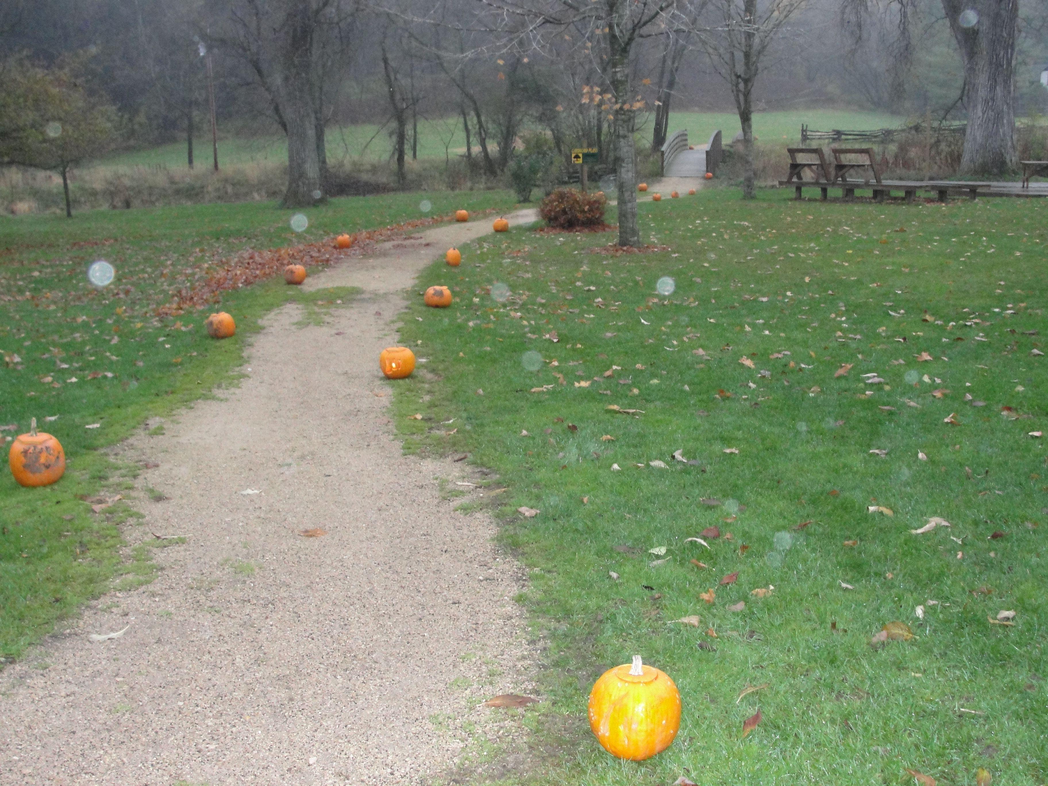 Pumpkin lined trails Pumpkin, Pumpkin patch, Halloween
